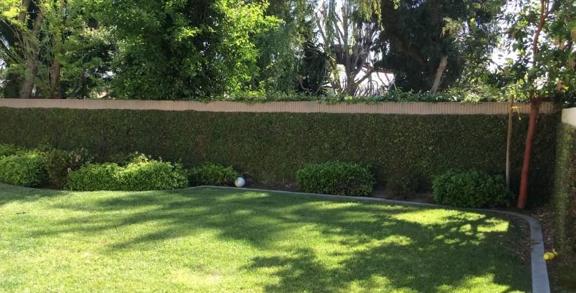 18406 Summer Backyard